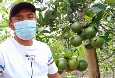 Makan Jeruk Manis, Petik Langsung dari Pohonnya