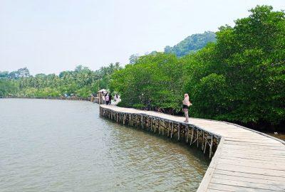 Hutan Mangrove Petengoran Makin Diminati Wisatawan