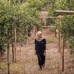 Agrowisata Kebun Jeruk Pakde Prapto