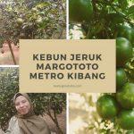 Pengalaman Mengunjungi Kebun Jeruk Margototo, Metro Kibang