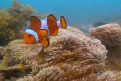 Snorkeling di Pantai Semukuk Indah
