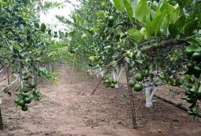 Ada Kolam Renang Juga di Agrowisata Kebun Jeruk Sinar Rejeki