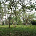 Menghirup Udara Segar di Hutan Kota 16 C
